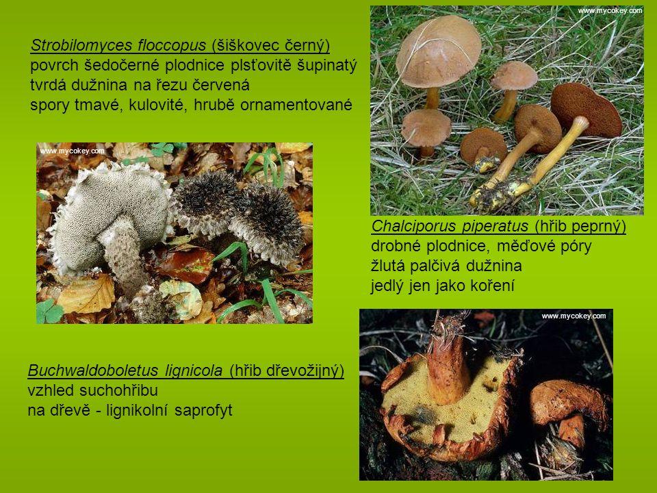 Strobilomyces floccopus (šiškovec černý) povrch šedočerné plodnice plsťovitě šupinatý tvrdá dužnina na řezu červená spory tmavé, kulovité, hrubě ornamentované Chalciporus piperatus (hřib peprný) drobné plodnice, měďové póry žlutá palčivá dužnina jedlý jen jako koření Buchwaldoboletus lignicola (hřib dřevožijný) vzhled suchohřibu na dřevě - lignikolní saprofyt www.mycokey.com