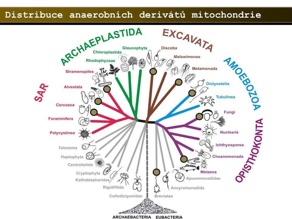 Distribuce anaerobních derivátů mitochondrie