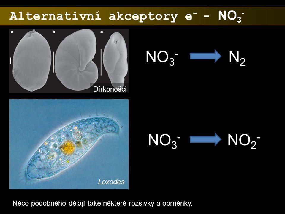 Alternativní akceptory e - - NO 3 - NO 3 - N2N2 NO 2 - Něco podobného dělají také některé rozsivky a obrněnky. Dírkonošci Loxodes