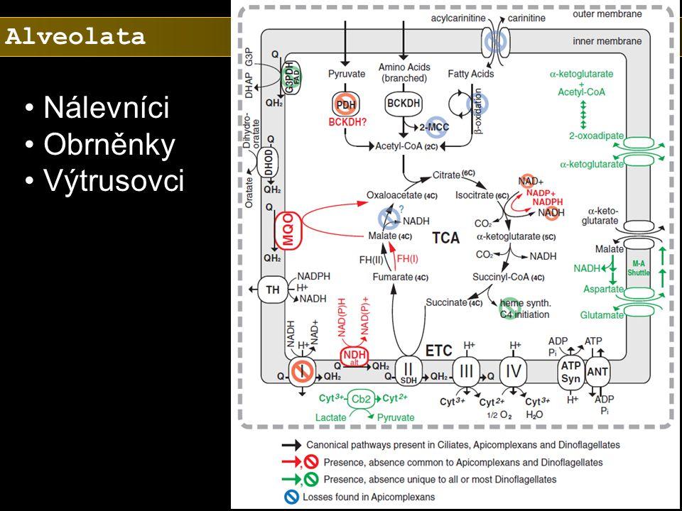 Alveolata Nálevníci Obrněnky Výtrusovci