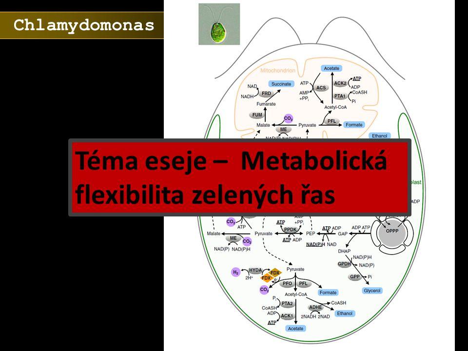 Chlamydomonas Téma eseje – Metabolická flexibilita zelených řas