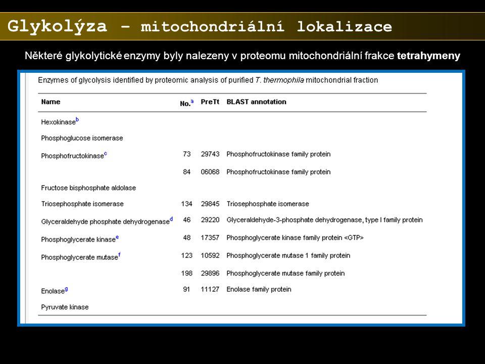 Některé glykolytické enzymy byly nalezeny v proteomu mitochondriální frakce tetrahymeny Glykolýza – mitochondriální lokalizace