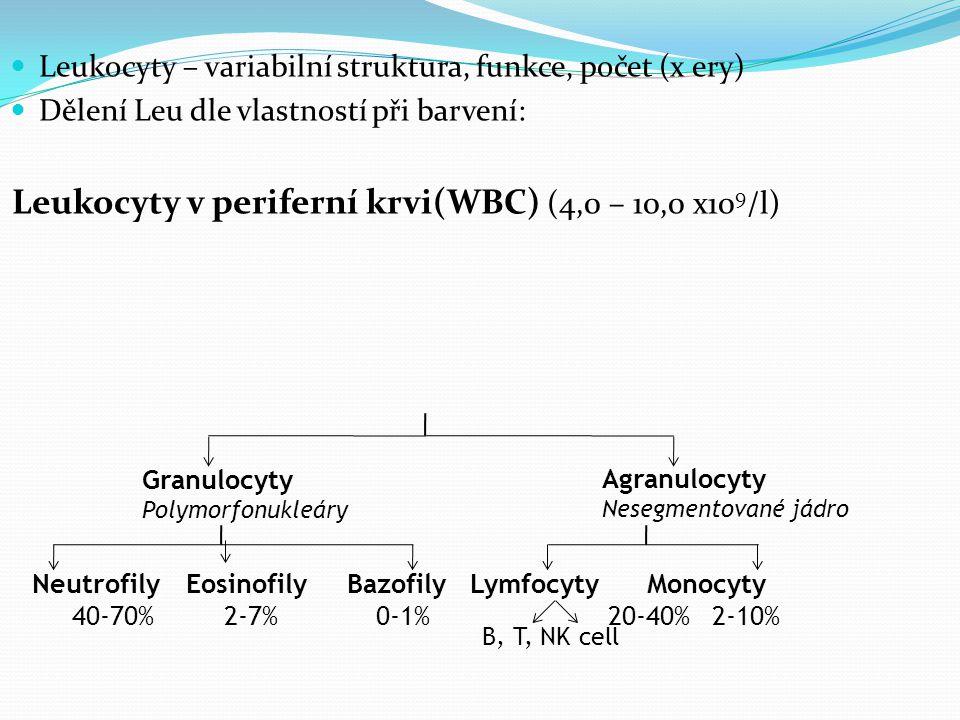 Leukocyty – variabilní struktura, funkce, počet (x ery) Dělení Leu dle vlastností při barvení: Leukocyty v periferní krvi(WBC) (4,0 – 10,0 x10 9 /l) Granulocyty Polymorfonukleáry Agranulocyty Nesegmentované jádro Neutrofily Eosinofily Bazofily Lymfocyty Monocyty 40-70%2-7% 0-1% 20-40% 2-10% B, T, NK cell
