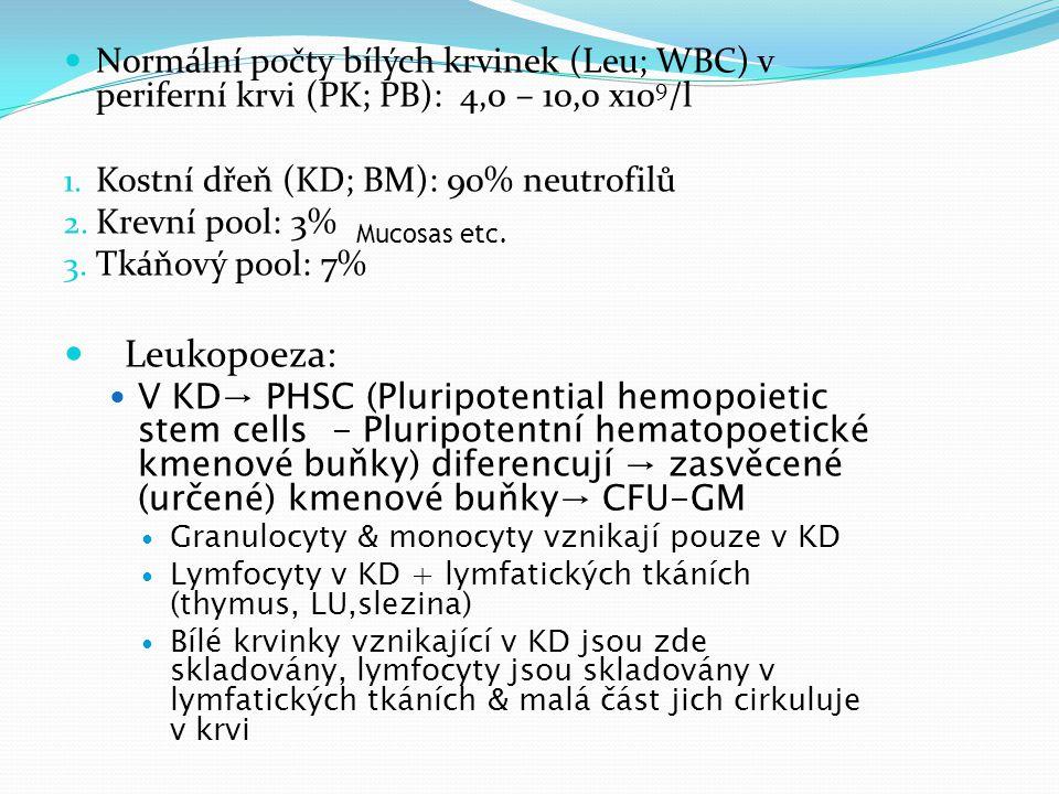 Geneze dle morfologie: ŘAda [a] reprezentuje myelocyty - neutrofilní, bazofilní, eozinofilní (z leva do prava).