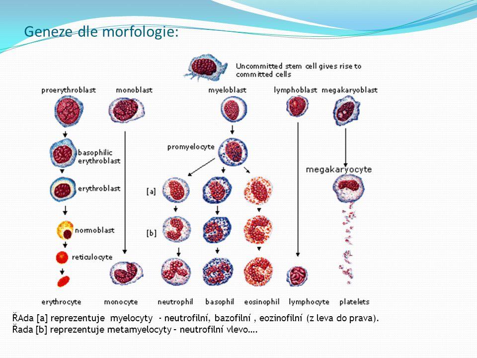 Biopsie lymfatické uzliny: jak exstirpace LU – celé!!.