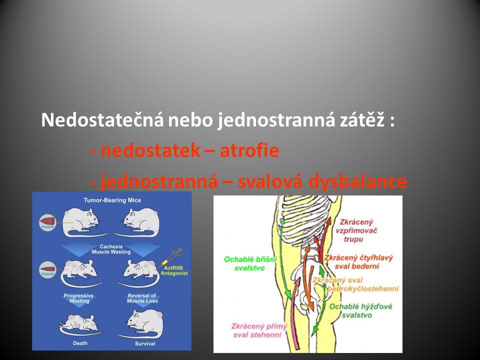 Nedostatečná nebo jednostranná zátěž : - nedostatek – atrofie - jednostranná – svalová dysbalance