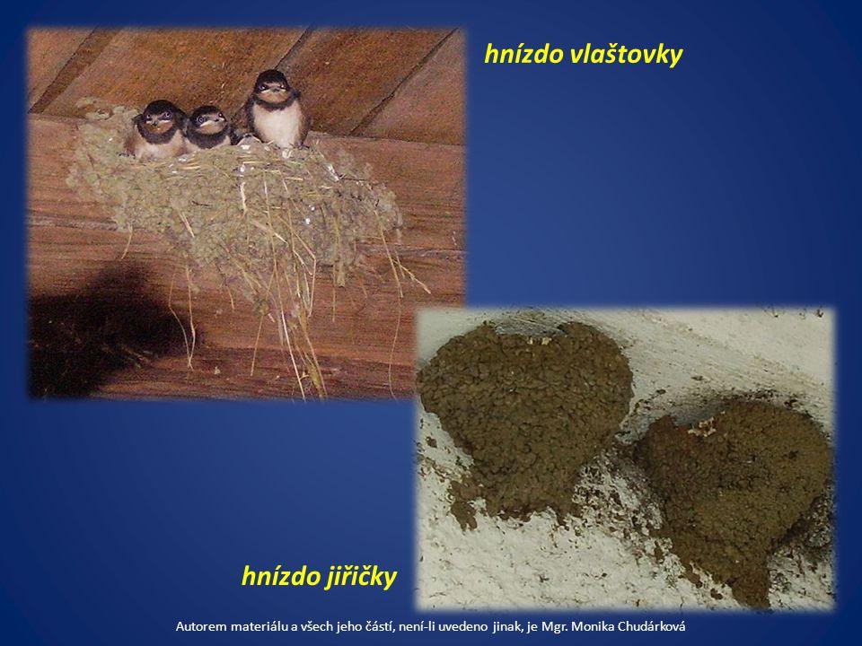 hnízdo vlaštovky hnízdo jiřičky Autorem materiálu a všech jeho částí, není-li uvedeno jinak, je Mgr.