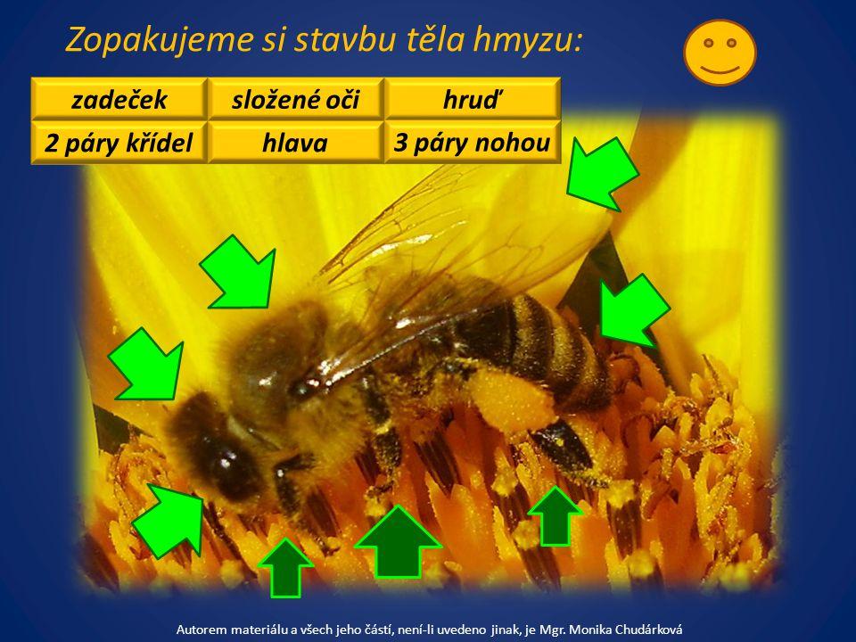 Zopakujeme si stavbu těla hmyzu: zadeček 2 páry křídel složené oči hlava hruď 3 páry nohou Autorem materiálu a všech jeho částí, není-li uvedeno jinak, je Mgr.