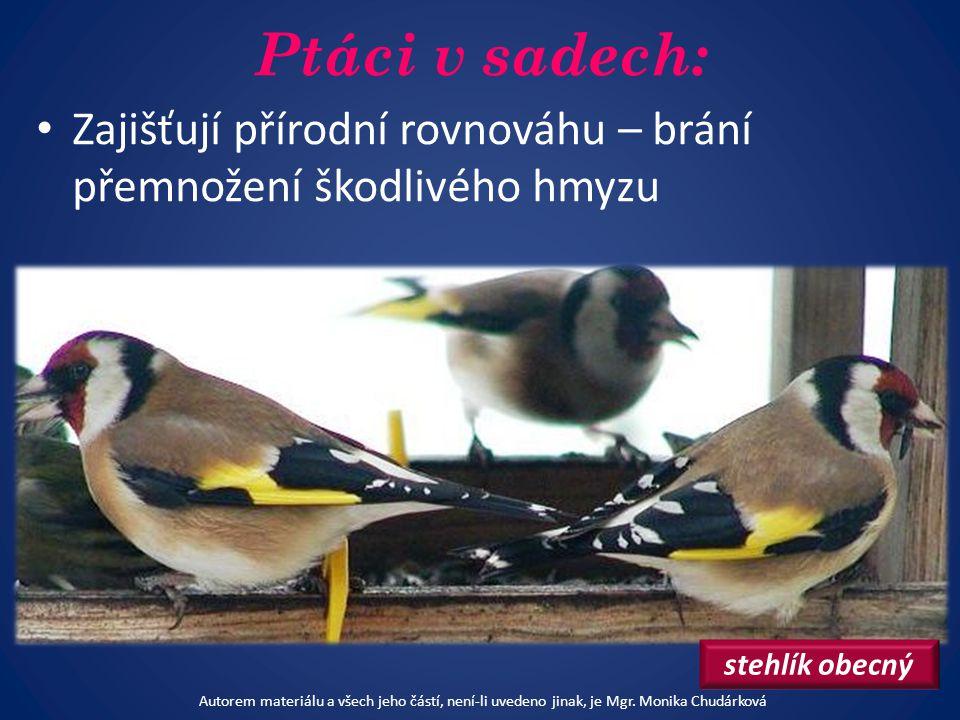 Ptáci v sadech: sýkora koňadra kos černý strakapoud Autorem materiálu a všech jeho částí, není-li uvedeno jinak, je Mgr.