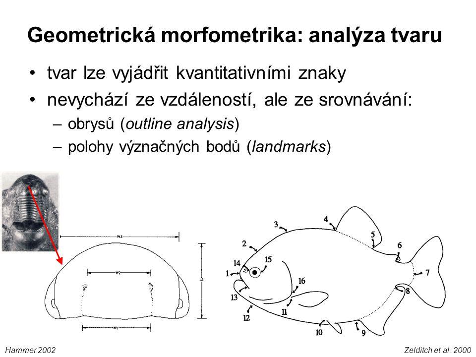 Geometrická morfometrika: analýza tvaru tvar lze vyjádřit kvantitativními znaky nevychází ze vzdáleností, ale ze srovnávání: –obrysů (outline analysis