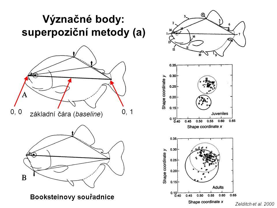 Význačné body: superpoziční metody (a) 0, 00, 1 základní čára (baseline) Booksteinovy souřadnice Zelditch et al. 2000