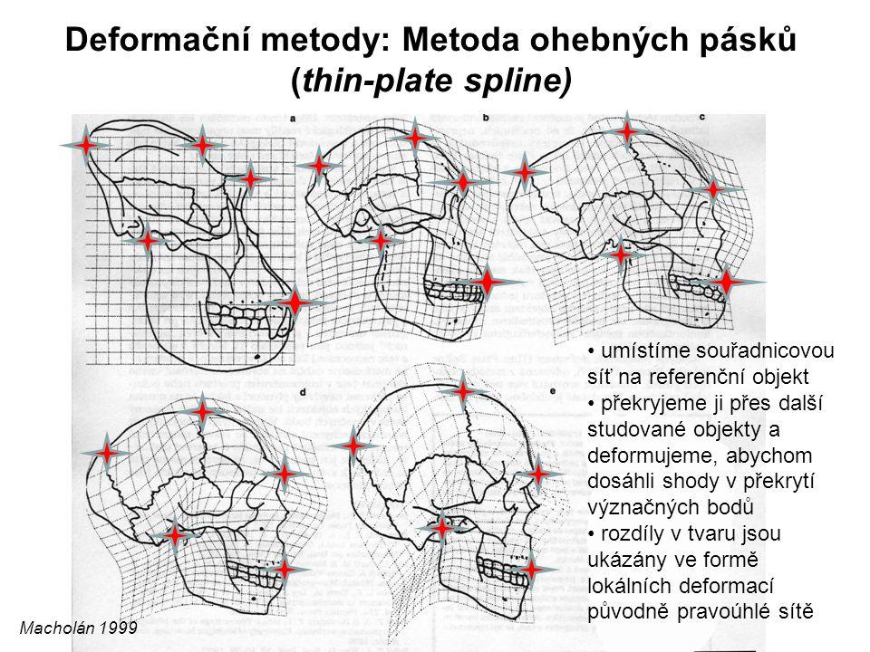 Deformační metody: Metoda ohebných pásků (thin-plate spline) Macholán 1999 umístíme souřadnicovou síť na referenční objekt překryjeme ji přes další st