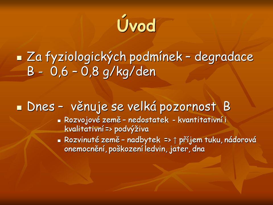 Úvod Za fyziologických podmínek – degradace B - 0,6 – 0,8 g/kg/den Za fyziologických podmínek – degradace B - 0,6 – 0,8 g/kg/den Dnes – věnuje se velk