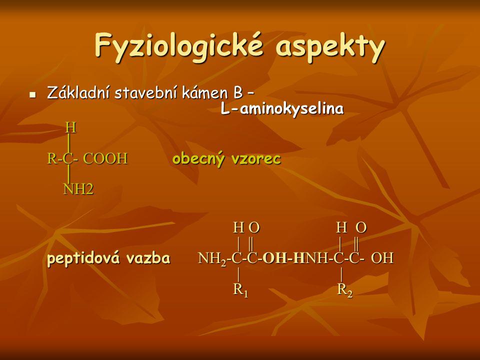 Fyziologické aspekty Základní stavební kámen B – L-aminokyselina Základní stavební kámen B – L-aminokyselina H │ R-C- COOH obecný vzorec │ NH2 H │ R-C