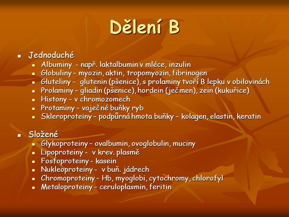 Dělení B Jednoduché Jednoduché Albuminy - např. laktalbumin v mléce, inzulin Albuminy - např. laktalbumin v mléce, inzulin Globuliny – myozin, aktin,