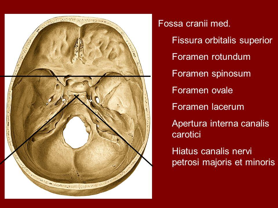 Fossa cranii med. Fissura orbitalis superior Foramen rotundum Foramen spinosum Foramen ovale Foramen lacerum Apertura interna canalis carotici Hiatus