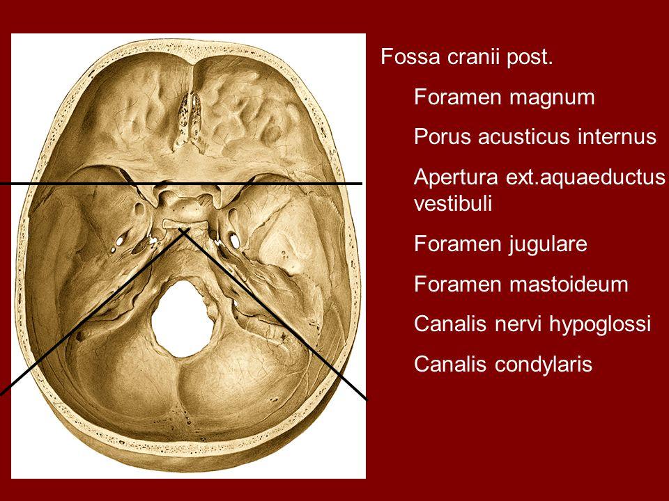Fossa cranii post. Foramen magnum Porus acusticus internus Apertura ext.aquaeductus vestibuli Foramen jugulare Foramen mastoideum Canalis nervi hypogl