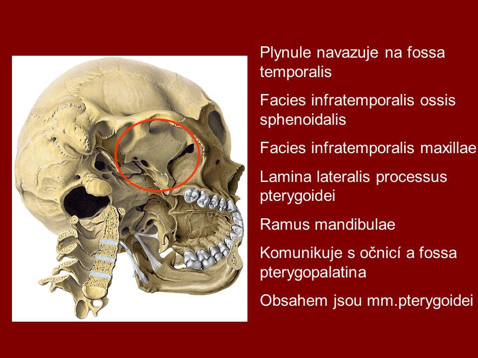Plynule navazuje na fossa temporalis Facies infratemporalis ossis sphenoidalis Facies infratemporalis maxillae Lamina lateralis processus pterygoidei