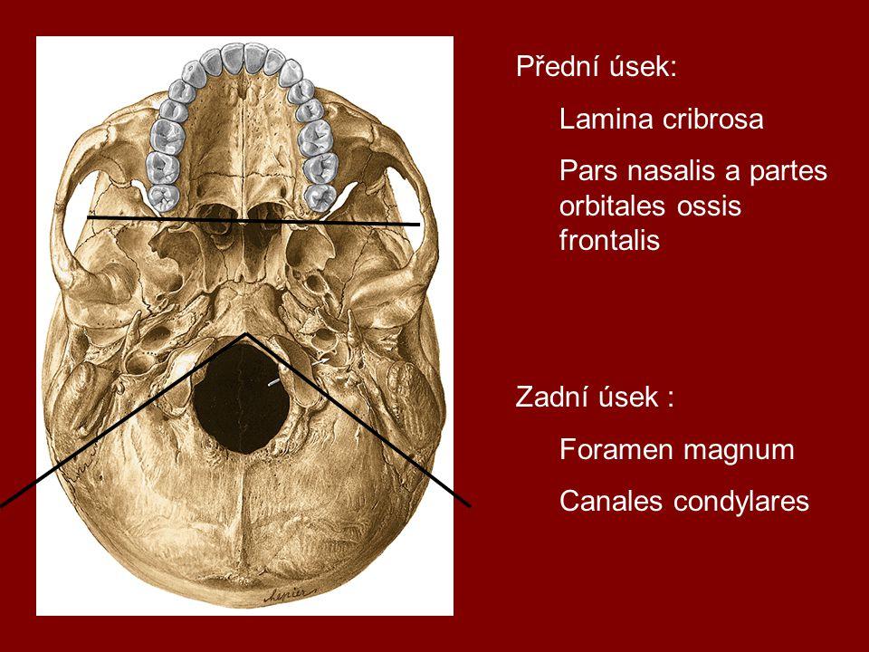 Lebka novorozence Fonticulus sphenoidalis, mastoideus Os tympanicum