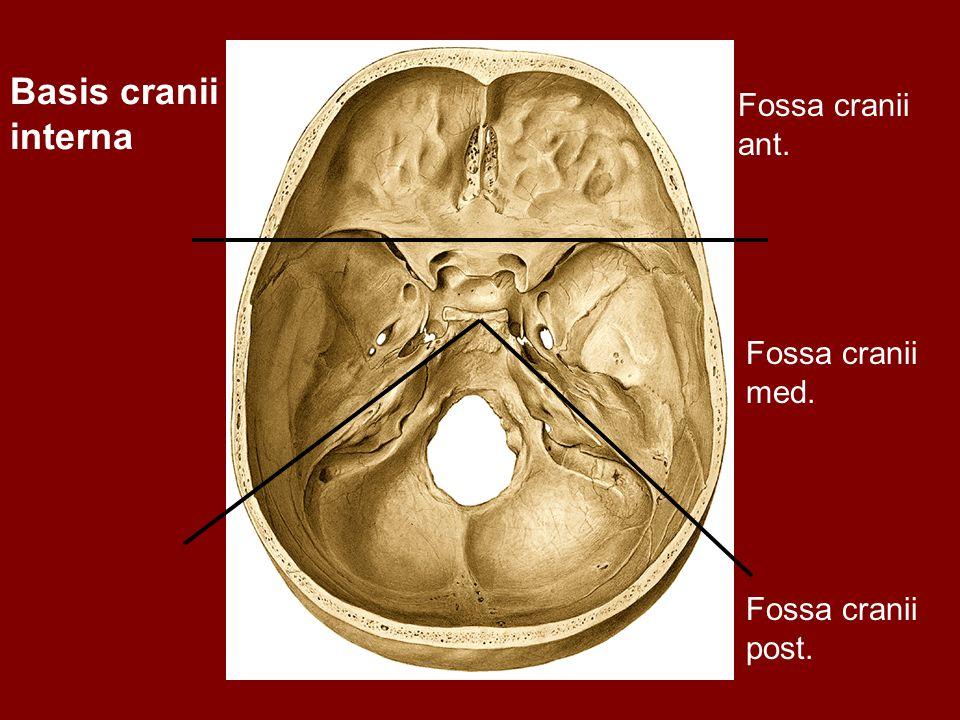 Basis cranii interna Fossa cranii ant. Fossa cranii med. Fossa cranii post.