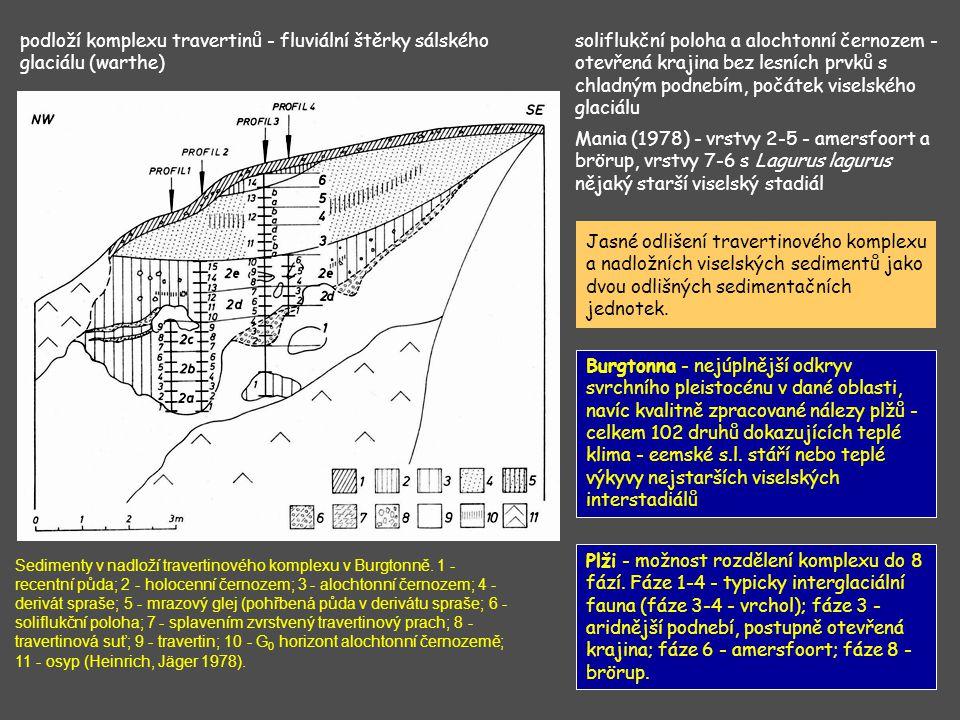 podloží komplexu travertinů - fluviální štěrky sálského glaciálu (warthe) soliflukční poloha a alochtonní černozem - otevřená krajina bez lesních prvk