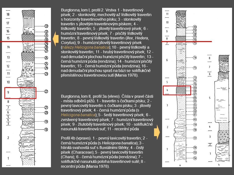 Burgtonna, lom I, profil 2. Vrstva 1 - travertinový písek; 2 - stonkovitý, mechovitý až lístkovitý travertin s horizonty travertinového písku; 3 - sto