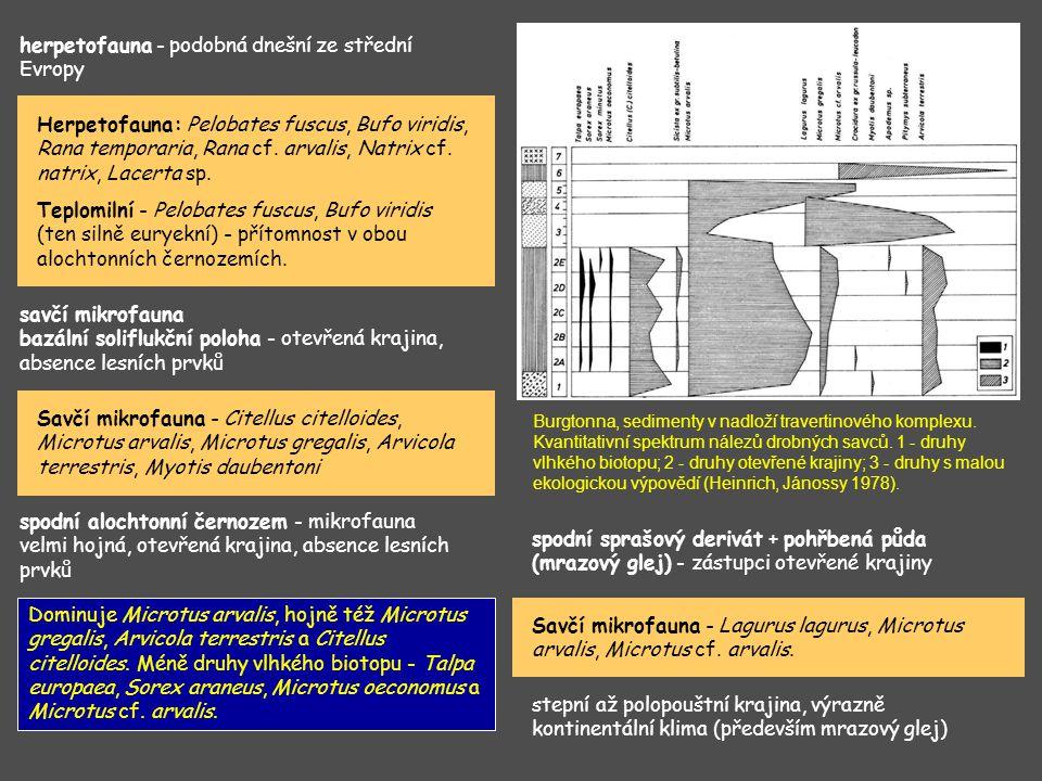 herpetofauna - podobná dnešní ze střední Evropy Herpetofauna: Pelobates fuscus, Bufo viridis, Rana temporaria, Rana cf. arvalis, Natrix cf. natrix, La
