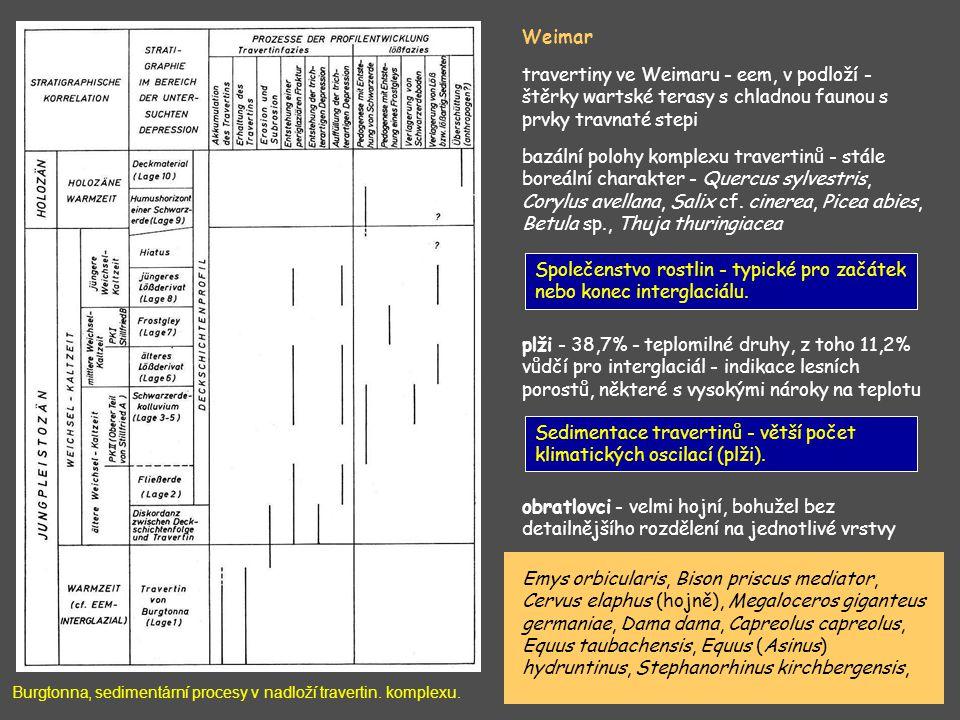 Burgtonna, sedimentární procesy v nadloží travertin. komplexu. Weimar travertiny ve Weimaru - eem, v podloží - štěrky wartské terasy s chladnou faunou