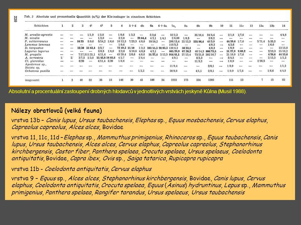Absolutní a procentuální zastoupení drobných hlodavců v jednotlivých vrstvách jeskyně Kůlna (Musil 1988). vrstva 13b – Canis lupus, Ursus taubachensis