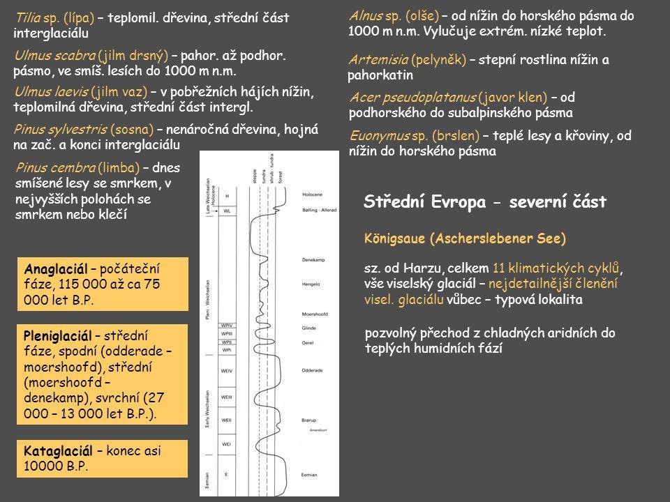 Tilia sp. (lípa) – teplomil. dřevina, střední část interglaciálu Ulmus scabra (jilm drsný) – pahor. až podhor. pásmo, ve smíš. lesích do 1000 m n.m. U