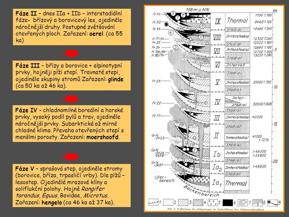 Fáze II – dnes IIa + IIb – interstadiální fáze- břízový a borovicový les, ojediněle náročnější druhy. Postupné zvětšování otevřených ploch. Zařazení: