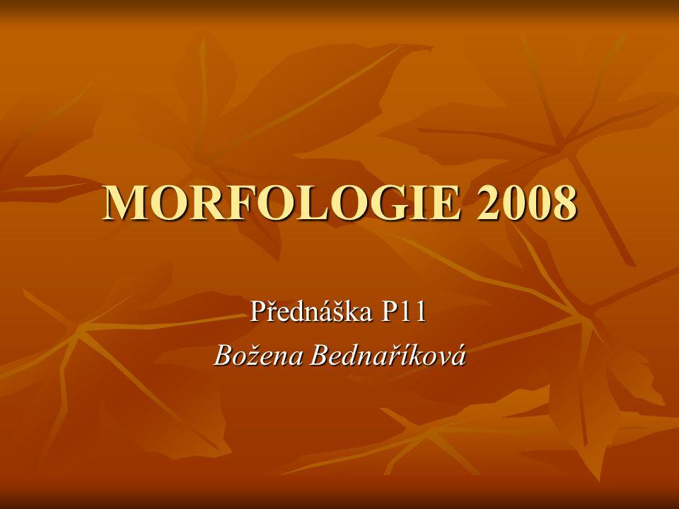 MORFOLOGIE 2008 Přednáška P11 Božena Bednaříková
