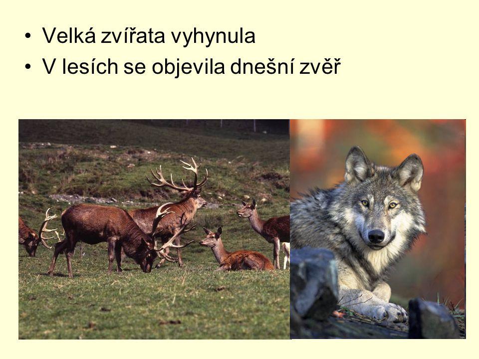 Velká zvířata vyhynula V lesích se objevila dnešní zvěř