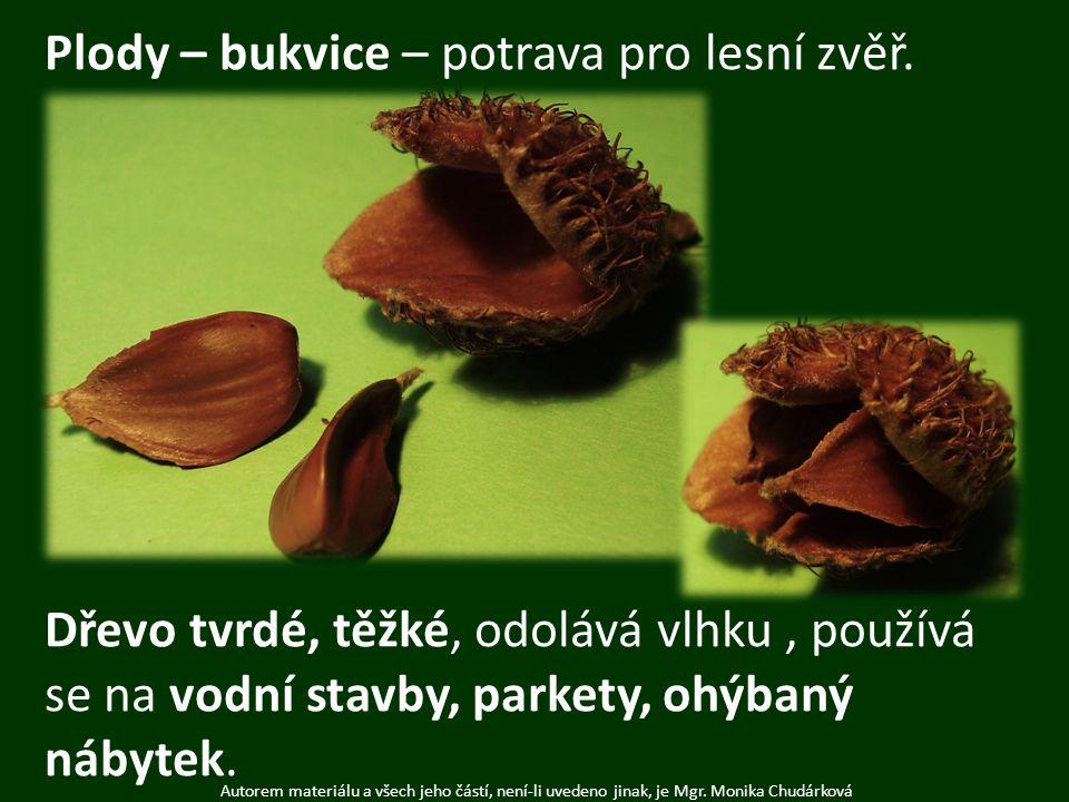 Autorem materiálu a všech jeho částí, není-li uvedeno jinak, je Mgr. Monika Chudárková Plody – bukvice – potrava pro lesní zvěř. Dřevo tvrdé, těžké, o