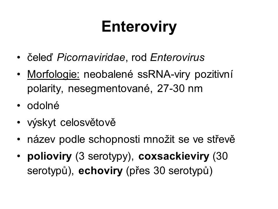 Enteroviry čeleď Picornaviridae, rod Enterovirus Morfologie: neobalené ssRNA-viry pozitivní polarity, nesegmentované, 27-30 nm odolné výskyt celosvětově název podle schopnosti množit se ve střevě polioviry (3 serotypy), coxsackieviry (30 serotypů), echoviry (přes 30 serotypů)
