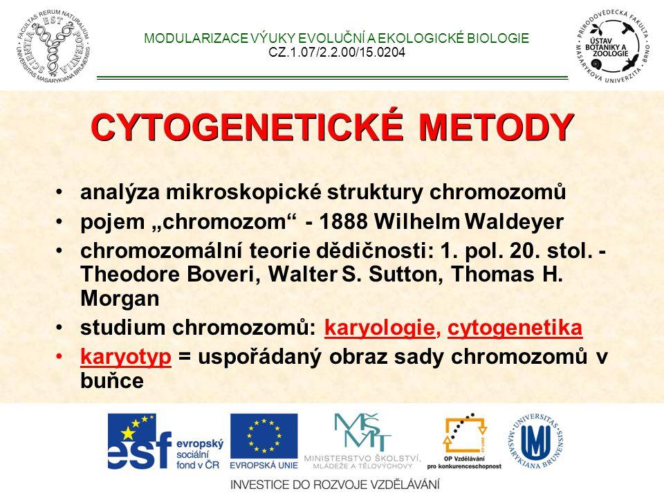 Struktura metafázního chromozomu