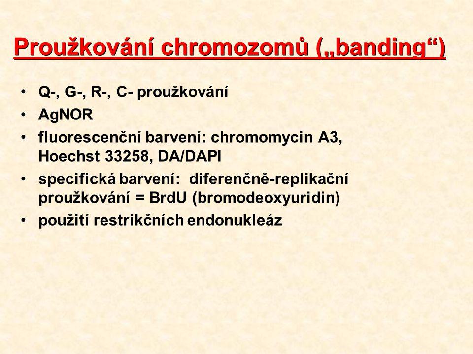 """Proužkování chromozomů (""""banding ) Q-, G-, R-, C- proužkování AgNOR fluorescenční barvení: chromomycin A3, Hoechst 33258, DA/DAPI specifická barvení: diferenčně-replikační proužkování = BrdU (bromodeoxyuridin) použití restrikčních endonukleáz"""