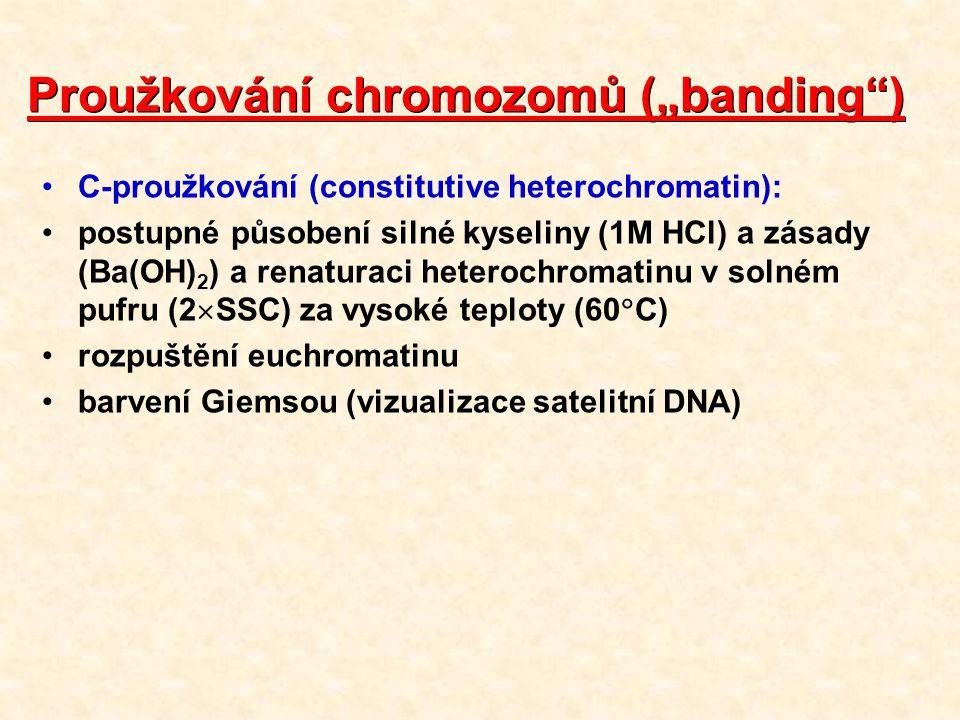 """Proužkování chromozomů (""""banding ) C-proužkování (constitutive heterochromatin): postupné působení silné kyseliny (1M HCl) a zásady (Ba(OH) 2 ) a renaturaci heterochromatinu v solném pufru (2  SSC) za vysoké teploty (60  C) rozpuštění euchromatinu barvení Giemsou (vizualizace satelitní DNA)"""