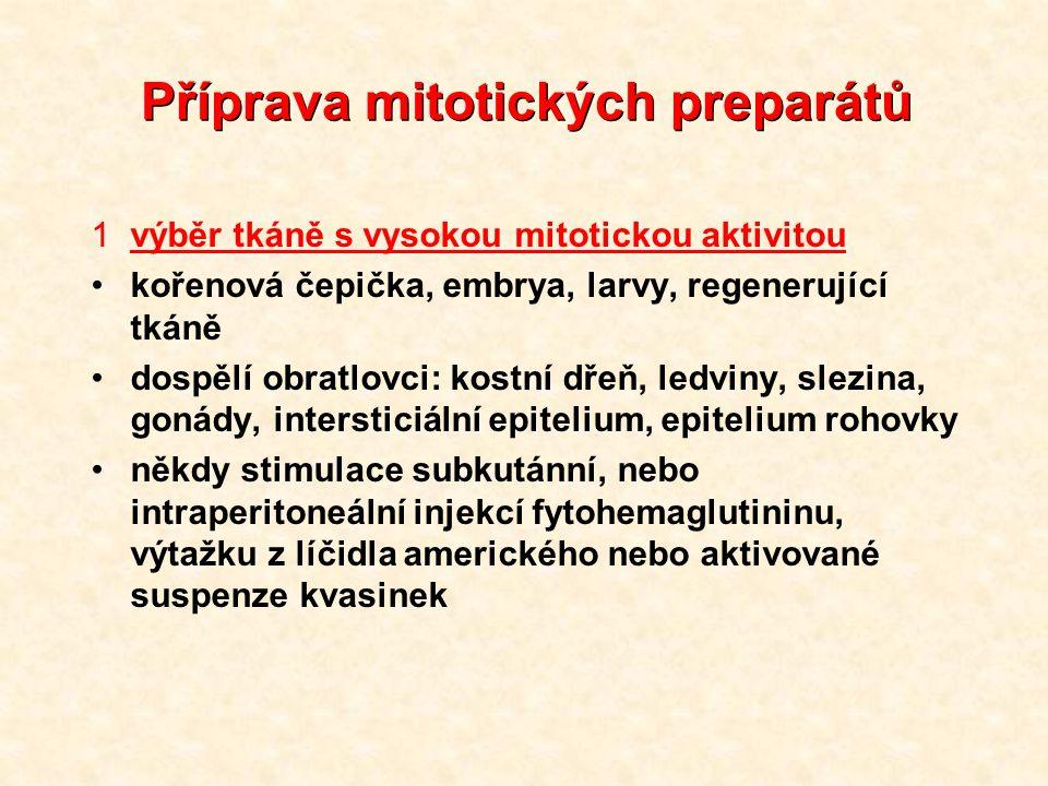 1výběr tkáně s vysokou mitotickou aktivitou kořenová čepička, embrya, larvy, regenerující tkáně dospělí obratlovci: kostní dřeň, ledviny, slezina, gonády, intersticiální epitelium, epitelium rohovky někdy stimulace subkutánní, nebo intraperitoneální injekcí fytohemaglutininu, výtažku z líčidla amerického nebo aktivované suspenze kvasinek Příprava mitotických preparátů