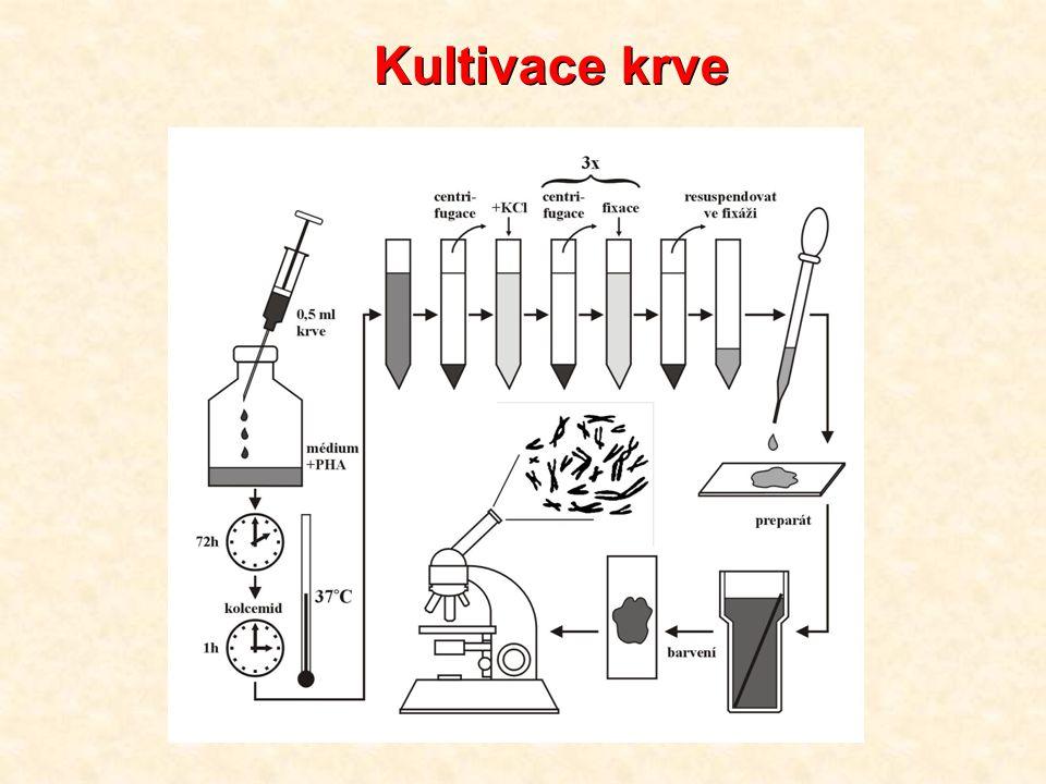 Příprava meiotických preparátů testes, pylové matečné buňky hypotonizace citronanem sodným, postup obdobný jako u mitotických preparátů průběh meiózy a význam jednotlivých stadií; synaptonemální komplexy (SC), štětkovité (lampbrush) chromozomy