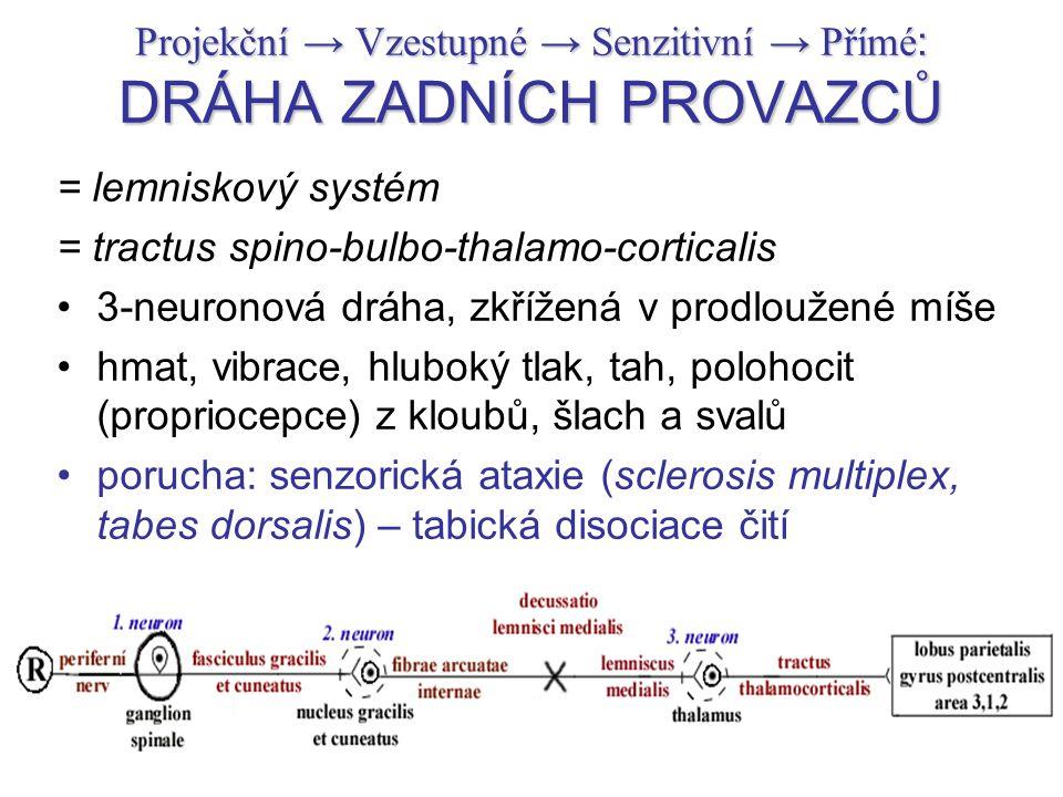 Projekční → Vzestupné → Senzitivní → Přímé : DRÁHA ZADNÍCH PROVAZCŮ = lemniskový systém = tractus spino-bulbo-thalamo-corticalis 3-neuronová dráha, zk