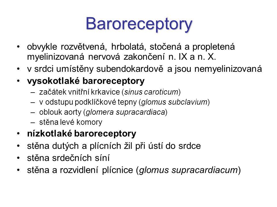 Baroreceptory obvykle rozvětvená, hrbolatá, stočená a propletená myelinizovaná nervová zakončení n. IX a n. X. v srdci umístěny subendokardově a jsou