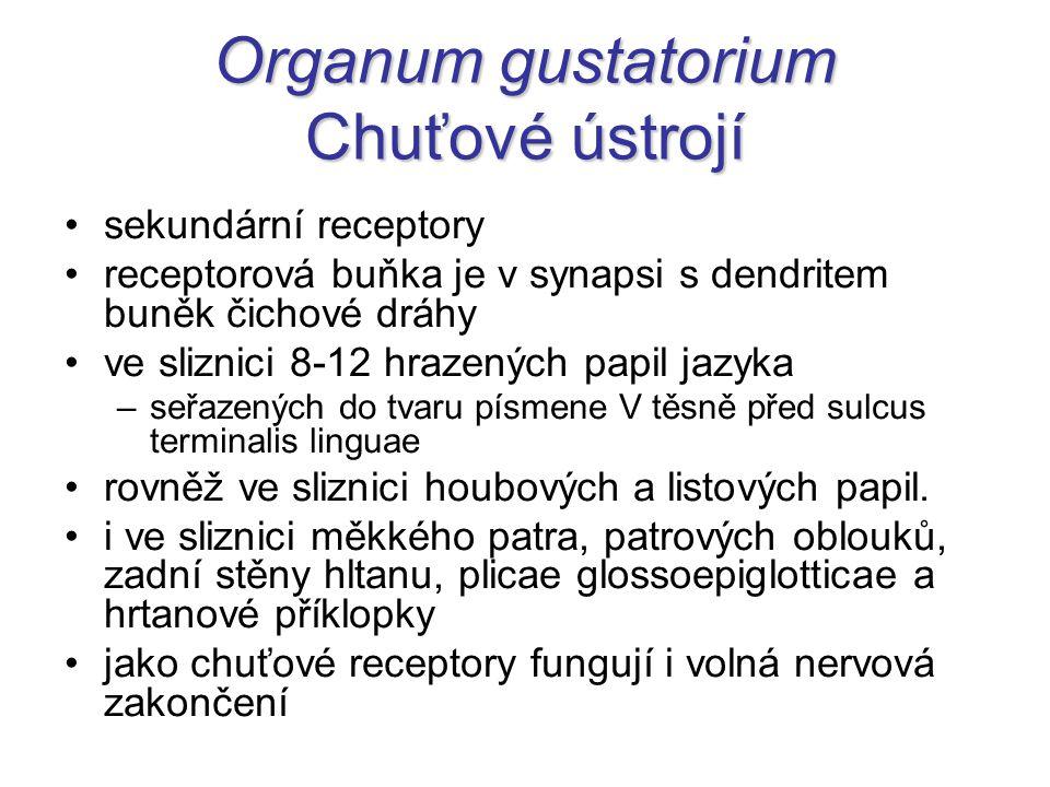 Projekční → Vzestupné → Senzorické CHUŤOVÁ DRÁHA 2.N: nuclei tractus solitarii → tractus tegmentalis centralis (při tr.