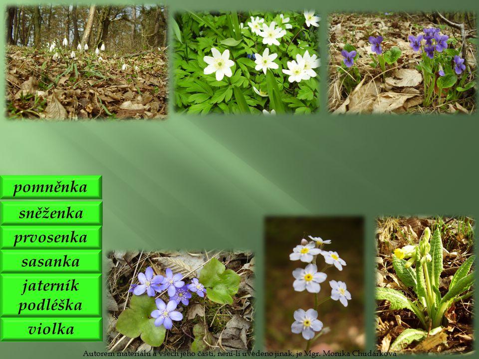 sněženka violka pomněnka prvosenka sasanka jaterník podléška Autorem materiálu a všech jeho částí, není-li uvedeno jinak, je Mgr.