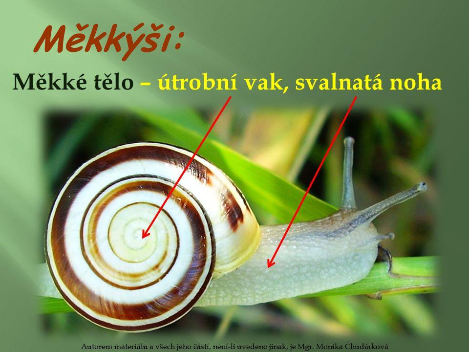 Měkké tělo – útrobní vak, svalnatá noha Měkkýši: Autorem materiálu a všech jeho částí, není-li uvedeno jinak, je Mgr.