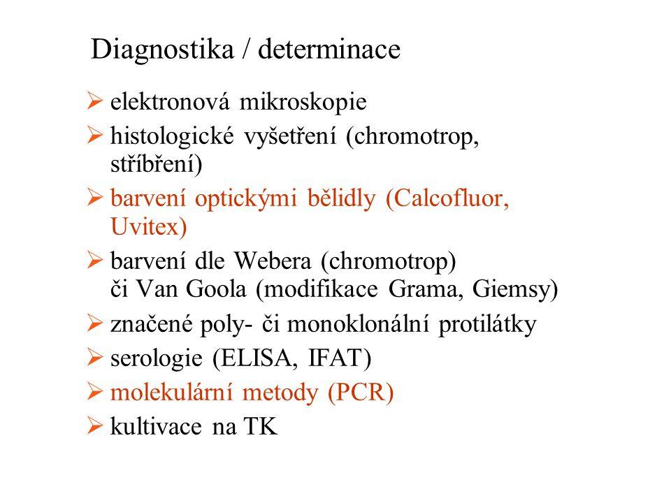Diagnostika / determinace  elektronová mikroskopie  histologické vyšetření (chromotrop, stříbření)  barvení optickými bělidly (Calcofluor, Uvitex)  barvení dle Webera (chromotrop) či Van Goola (modifikace Grama, Giemsy)  značené poly- či monoklonální protilátky  serologie (ELISA, IFAT)  molekulární metody (PCR)  kultivace na TK