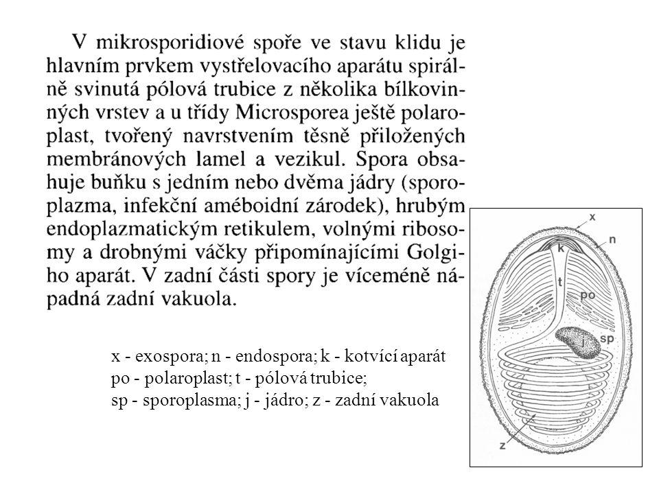 x - exospora; n - endospora; k - kotvící aparát po - polaroplast; t - pólová trubice; sp - sporoplasma; j - jádro; z - zadní vakuola