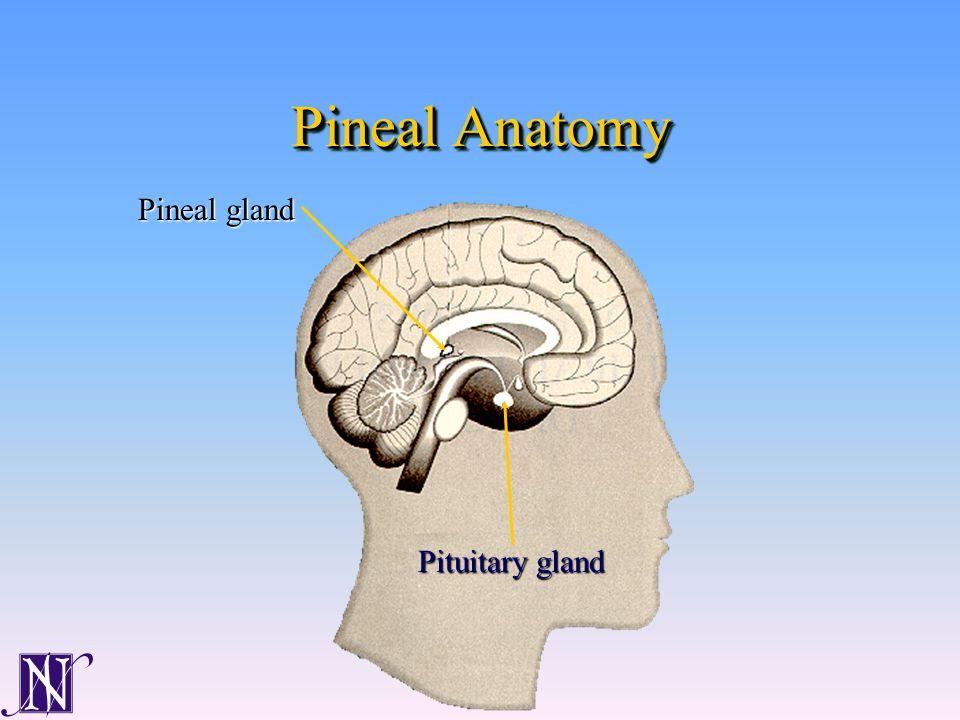 Pineal Anatomy Pituitary gland Pineal gland