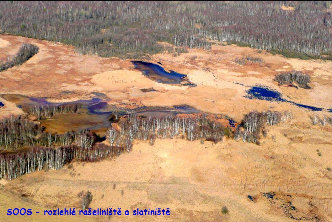 Přírodní rezervace SOOS u Františkových Lázní - rozlehlé rašeliniště a slatiniště