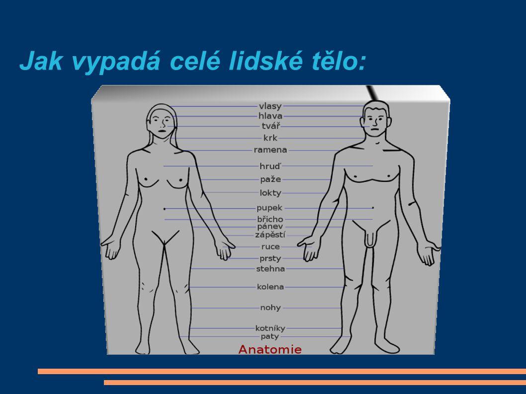 http://www.google.cz/imgres?imgurl=http://www.kky.zcu.cz/uploads/research-fields/sign-language- synthesis/femaleFront.png&imgrefurl=http://www.kky.zcu.cz/en/research-fields/sign-language- synthesis&usg=__ZGnfD3F7XTixlTwUUWk9rxeOXd8=&h=411&w=207&sz=40&hl=cs&start=0&zoom=1&tbnid=j_lUuMxf- f_v4M:&tbnh=121&tbnw=60&prev=/images%3Fq%3Dlidsk%25C3%25A1%2Bpostava%26hl%3Dcs%26biw%3D1276%26bih%3D557%26g bv%3D2%26tbs%3Disch:1&itbs=1&iact=rc&dur=343&ei=VGN1TLzyG4u7jAeHvvHtBQ&oei=VGN1TLzyG4u7jAeHvvHtBQ&esq=1&page=1 &ndsp=27&ved=1t:429,r:26,s:0&tx=29&ty=57 Použité zdroje: http://www.google.cz/imgres?imgurl=http://files.viaweb.cz/Image/4/chci-bzt-zdrava-nemoci-tela/moz2.jpg&imgrefurl=http://www.kafe.cz/chci-byt- zdrava/nemoci-tela/mozek-co-o-nem-nevite-1131.aspx&usg=__SCaPWosf3d8z9wTYOq- xjepIuv8=&h=300&w=500&sz=22&hl=cs&start=0&zoom=1&tbnid=IMbU8r- iCQtDnM:&tbnh=138&tbnw=189&prev=/images%3Fq%3Dmozek%2B%25C4%258Dlov%25C4%259Bka%26hl%3Dcs%26biw%3D1276%26bih %3D557%26gbv%3D2%26tbs%3Disch:1&itbs=1&iact=hc&vpx=407&vpy=231&dur=265&hovh=174&hovw=290&tx=191&ty=116&ei=EGR1TL3R EcSCswby06mJBg&oei=3mN1TKPAKciQjAet-8TyBQ&esq=28&page=1&ndsp=18&ved=1t:429,r:8,s:0 http://www.ucebnipomucky.eu/image/vyrobky/hlava.jpg http://zdravi.dama.cz/clanek.php?d=2326 http://www.fallingpixel.com/human-heart-3d-model/11334 http://www.google.cz/imgres?imgurl=http://www.peterjurek.com/rbv_site/images/big_slides/stom_ex.jpg&imgrefurl=http://www.gymhol.cz/proj ekt/biologie/travici/travici1.htm&usg=__- TL3clb9x9SKAzVcXVWLE70K5C0=&h=403&w=470&sz=96&hl=cs&start=0&zoom=1&tbnid=b231uLtWdIJUAM:&tbnh=129&tbnw=143&prev=/ images%3Fq%3Dlidsk%25C3%25BD%2B%25C5%25BEaludek%26hl%3Dcs%26biw%3D1276%26bih%3D557%26gbv%3D2%26tbs%3Disc h:1&itbs=1&iact=hc&vpx=728&vpy=215&dur=31&hovh=208&hovw=242&tx=145&ty=123&ei=bGZ1TIDKIY6UjAfJ1Lj6BQ&oei=bGZ1TIDKIY6U jAfJ1Lj6BQ&esq=1&page=1&ndsp=21&ved=1t:429,r:11,s:0